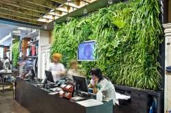 Природа - друг человека или кратко о растениях в интерьере