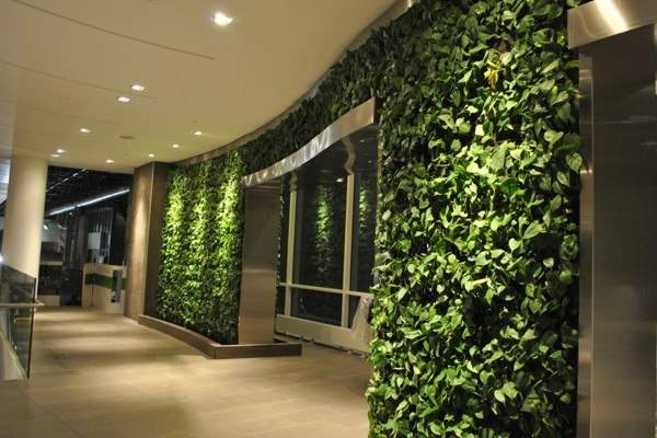 Живая стена, вертикальное озеленение